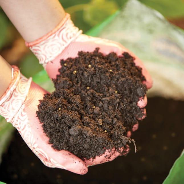 Hand holding soil.