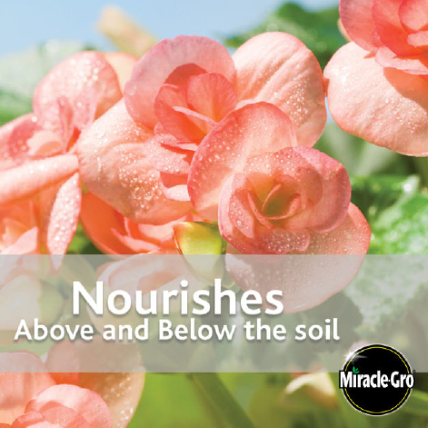 Nourishes Above and Below the Soil