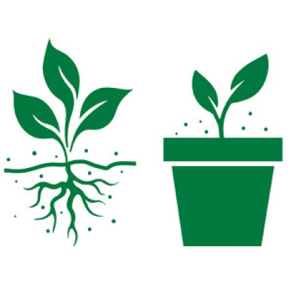 In-ground and in container icon