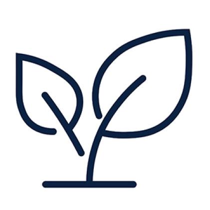 Pennington Smart Seed Dense Shade Seedling Emergence