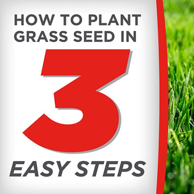 Pennington Smart Seed Dense Shade How to Apply