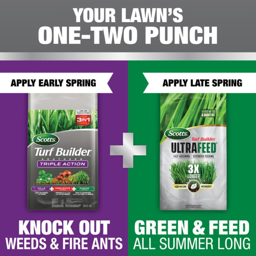 Apply Scotts Turf Builder Southern Triple Action in Early Spring, then apply Scotts Turf Builder Ultrafeed in Late Spring for a great lawn.