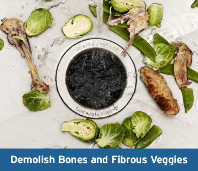 Bones in sink