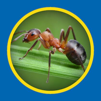 Sevin Insect Killer Ready to Spray kills ants