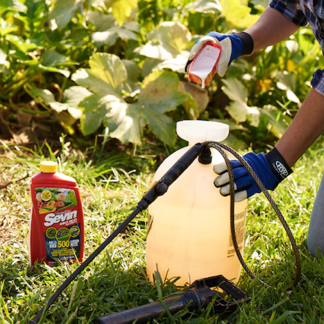 Sevin Insect Killer Concentrate step 2 application