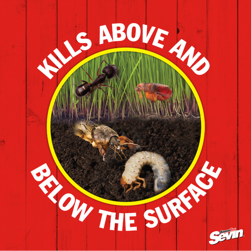 Sevin Insect Killer Lawn Granules kills pests above and below the surface