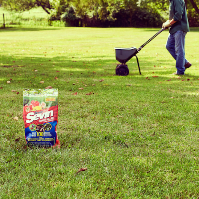 Sevin Insect Killer Lawn Granules step 3 application