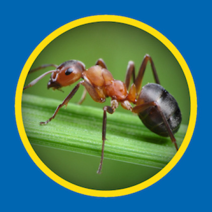 Sevin Insect Killer Concentrate kills ants