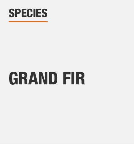 Tree species is grand fir