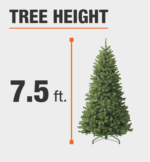 The tree height is 7.5 ft.