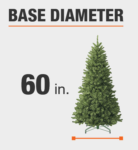 The base diameter of this tree is 60 in.