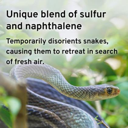 Temporarily Disrupts Snakes' Sense of Smell