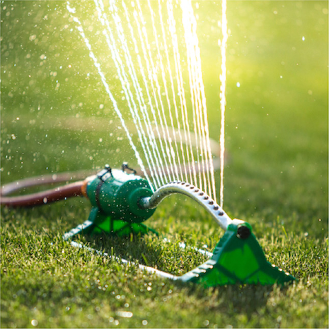 Pennington Sun and Shade Lawn Booster needs to be watered daily