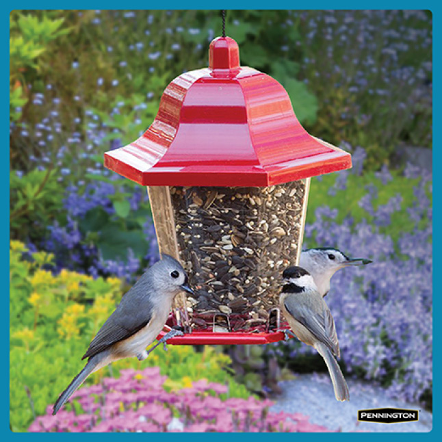 Pennington Ultimate Songbird Blend Timing for New Feeders
