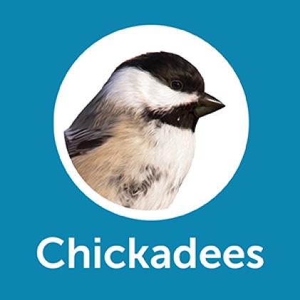 Pennington Ultimate Songbird Blend Grosbeaks
