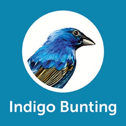 Pennington Ultimate Songbird Blend Indigo Buntings