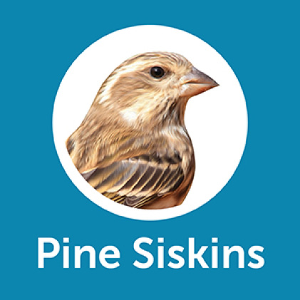 Pennington Ultimate Songbird Blend Pine Siskins