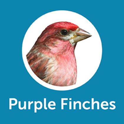 Pennington Ultimate Songbird Blend Purple Finches