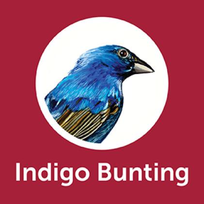 Pennington Premium Black Oil Sunflower Seed Cardinals