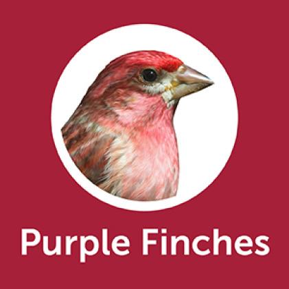 Pennington Premium Black Oil Sunflower Seed Purple Finches
