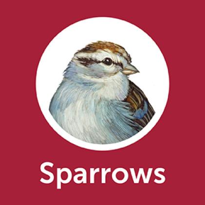 Pennington Premium Black Oil Sunflower Seed Sparrowss