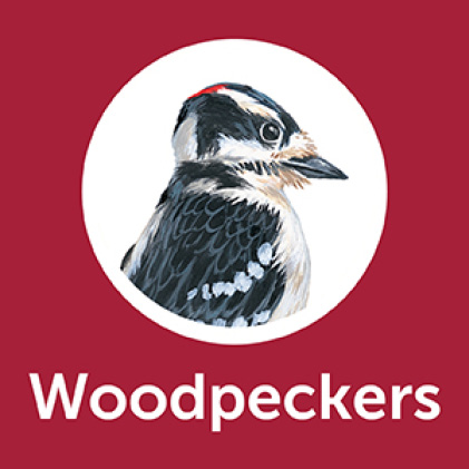 Pennington Premium Black Oil Sunflower Seed Woodpeckers