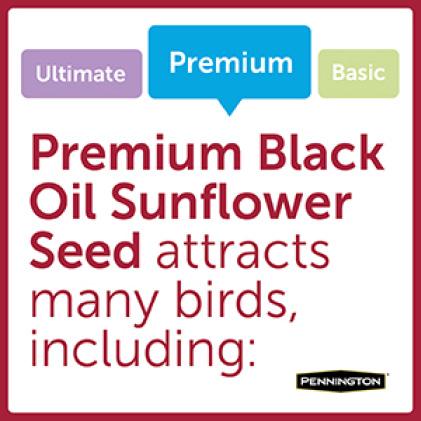 Pennington Premium Black Oil Sunflower Seed Bird Types
