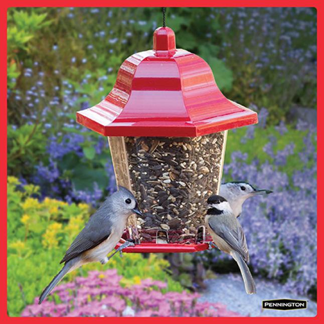 Pennington Premium Birder's Blend Timing for New Feeders