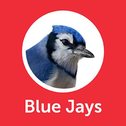 Pennington Premium Birder's Blend Blue Jays