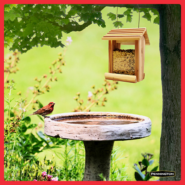 Pennington Premium Birder's Blend Feeding Tips