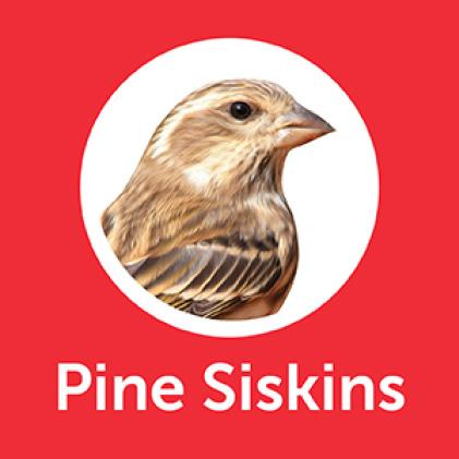 Pennington Premium Birder's Blend Purple Pine Siskins