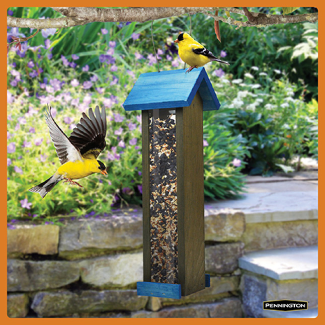 Pennington Premium Wild Finch Food Blend Timing for New Feeders