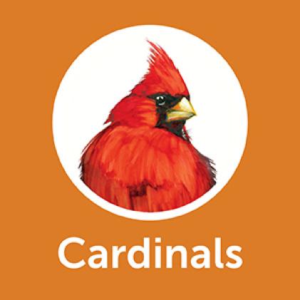 Pennington Premium Wild Finch Food Blend Cardinals