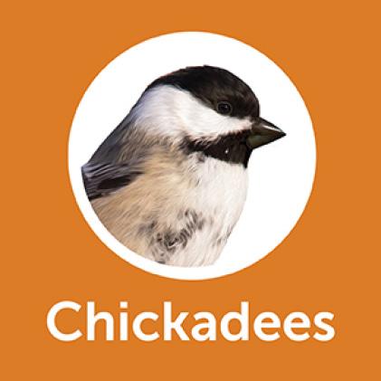Pennington Premium Wild Finch Food Blend Pine Chickadees