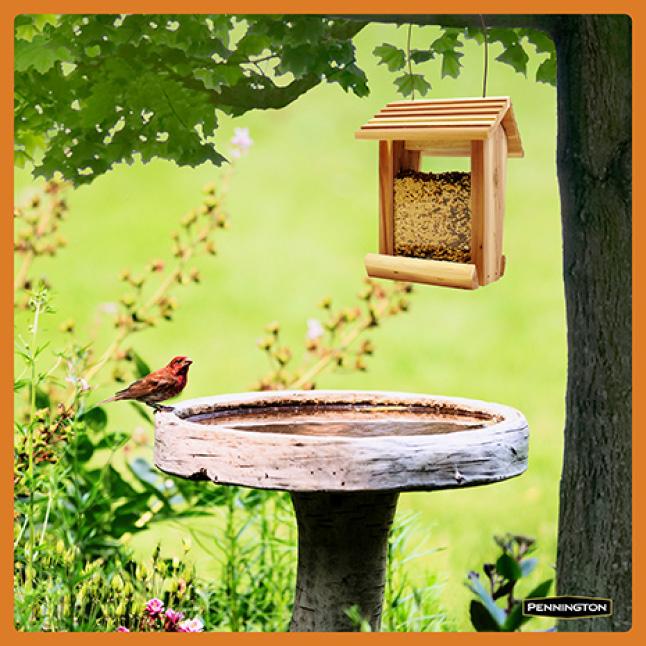Pennington Premium Wild Finch Food Blend Feeding Tips
