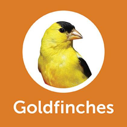 Pennington Premium Wild Finch Food Blend Goldfinches