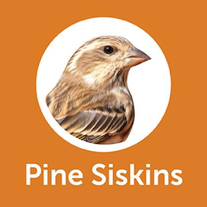 Pennington Premium Wild Finch Food Blend Pine Siskins