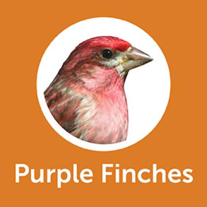 Pennington Premium Wild Finch Food Blend Purple Finches