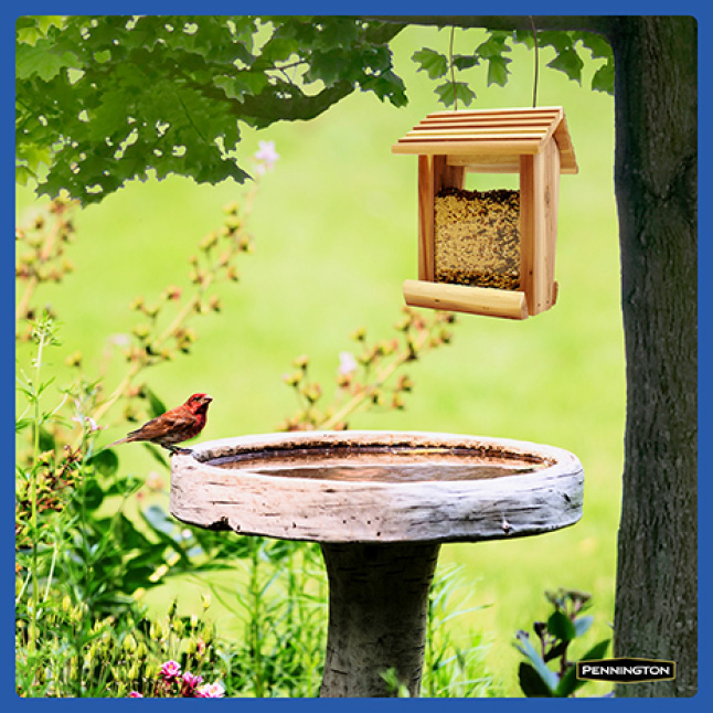 Pennington Classic Wild Bird Food Feeding Tips