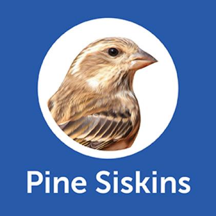 Pennington Classic Wild Bird Food Pine Siskins