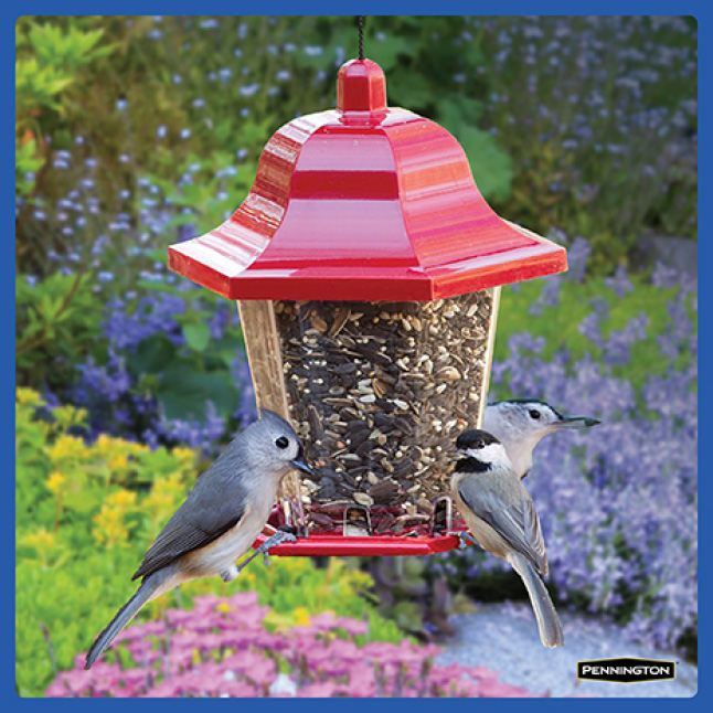 Pennington Classic Wild Bird Food Timing for New Feeders