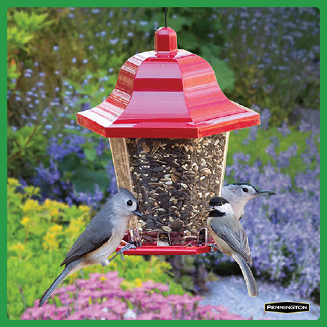 Pennington Premium Safflower Seed Timing for New Feeders