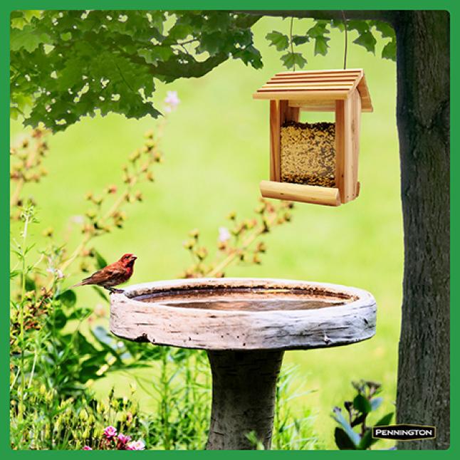 Pennington Premium Safflower Seed Feeding Tips