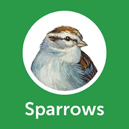 Pennington Premium Safflower Seed Sparrows