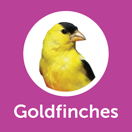Pennington Ultimate Nut and Fruit Blend Goldfinches