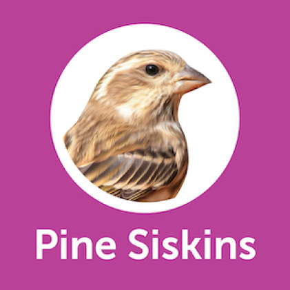 Pennington Ultimate Nut and Fruit Blend Pine Siskins