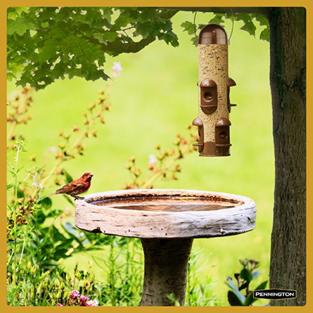 Pennington Premium Thistle Seed for Birds Feeding Tips