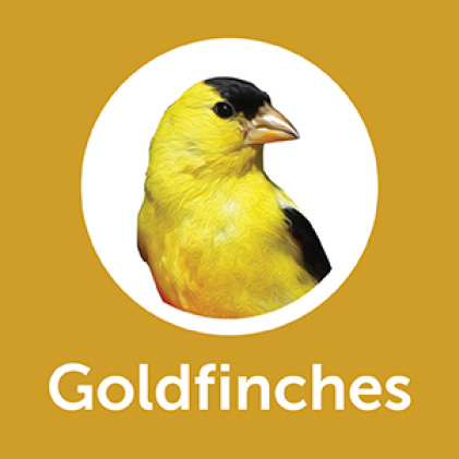Pennington Premium Thistle Seed for Birds Goldfinches
