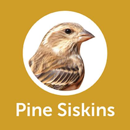 Pennington Premium Thistle Seed for Birds Pine Siskins