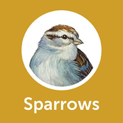 Pennington Premium Thistle Seed for Birds Sparrows